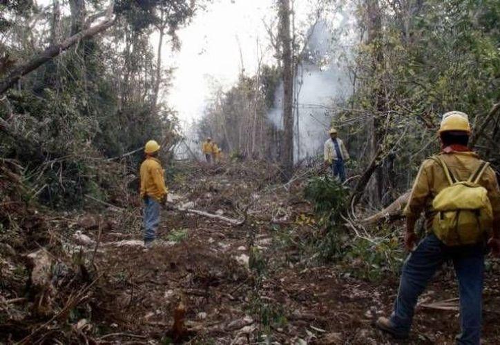 eis incendios son combatidos por personal de la Conafor, la Secretaría de la Defensa Nacional (Sedena), Protección Civil municipal y el resto brigadas comunitarias. (Foto de Contexto/Internet)
