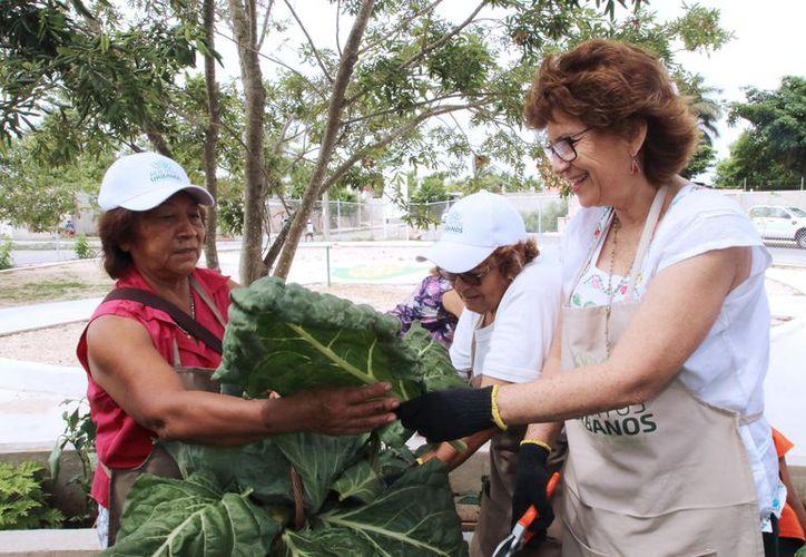 La alcaldesa de Mérida, María Fritz Sierra, durante su recorrido por el huerto urbano en la colonia Roble Agrícola. (Milenio Novedades)