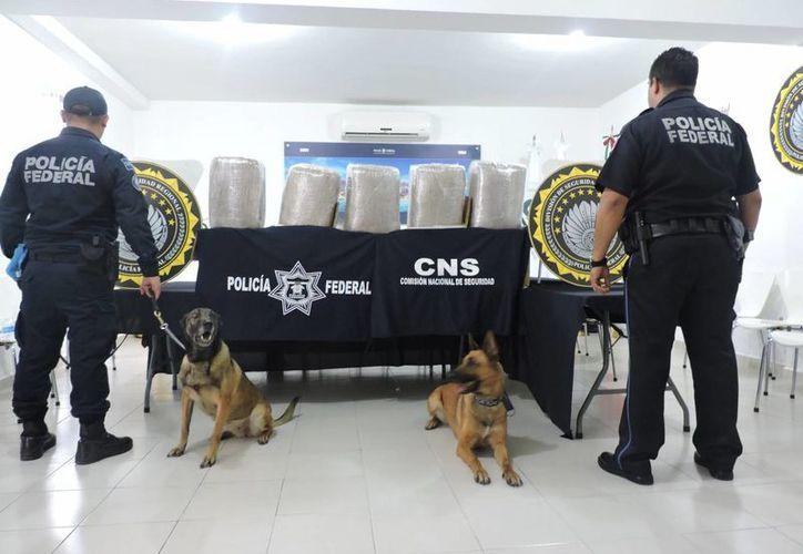 La Policía Federal decomisó 95 kilogramos de droga en una empresa de paquetería de Cancún. (Cortesía)