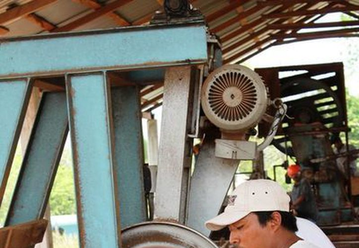 Los integrantes del ejido Caobas no han encontrado aún un mercado estable al cual venderle la madera certificada que producen.  (Edgardo Rodríguez/SIPSE)