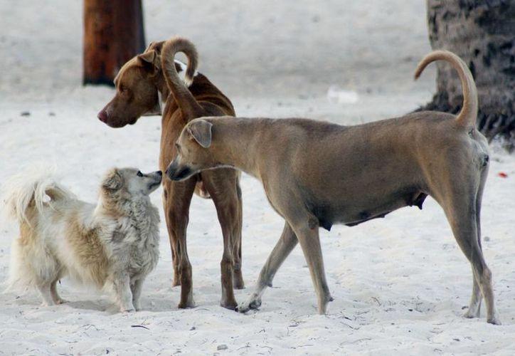 Consejo ciudadano vela por la protección y bienestar de animales. (Sergio Orozco/SIPSE)