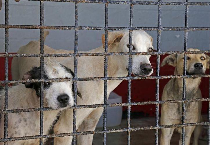 En julio pasado, hasta 10 perros a la semana viajaron hasta el país del norte para empezar una nueva vida. (Archivo)