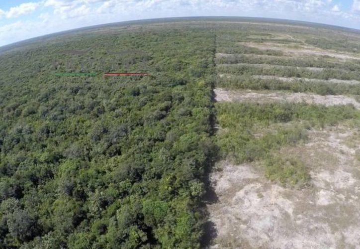 En el terreno se dio cabal cumplimiento a las disposiciones legales en materia ambiental. (Cortesía)