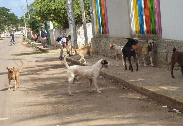 Lidia Saleh, presidenta de AFAD, afirma que en esta temporada se incrementa el abandono de perros y gatos. En la imagen, numerosos animales callejeros sin correa y sueltos en la calle. (Archivo/SIPSE)