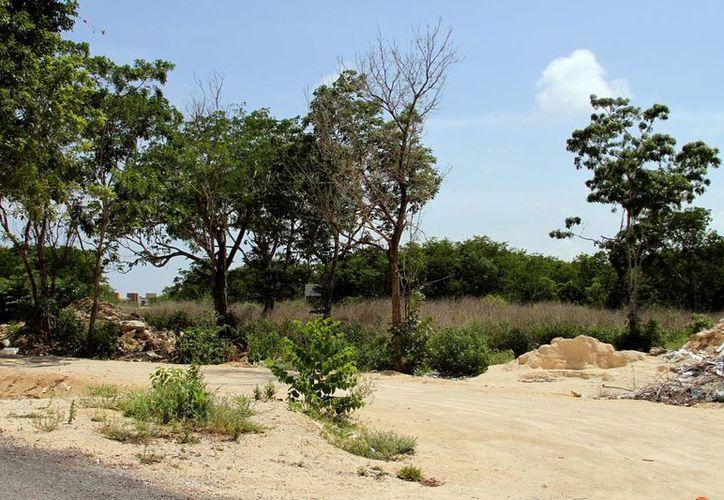 Este es el terreno en donde será construida la alberca semi olímpica de la Cruz Roja.  (Adrián Monroy/SIPSE)