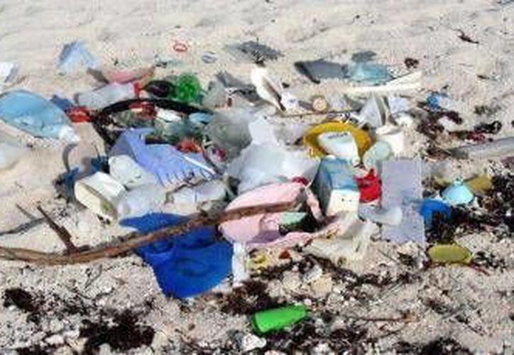 En trabajos de limpieza se han recolectado 96 kilogramos de desechos, algunos de origen asiático y europeo. (Redacción/SIPSE)