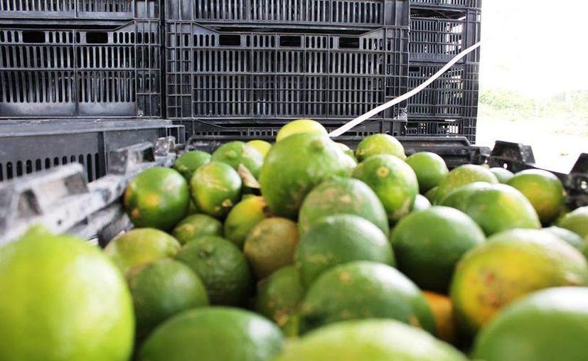 Los dueños de los negocios de comida se ven en la necesidad de mantener la oferta a pesar del excesivo valor de los limones. (Edgardo Rodríguez/SIPSE)