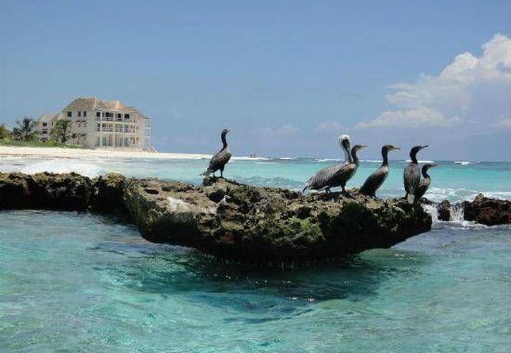 En la Caleta Tankah de Tulum, Quintana Roo será la sede que recibirá el festival de música electrónica. (Redacción/SIPSE)