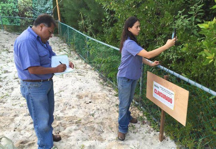 Dos hoteles de la Riviera Maya han evadido el pago de sanciones por dañar vegetación protegida. (Daniel Pacheco/SIPSE)