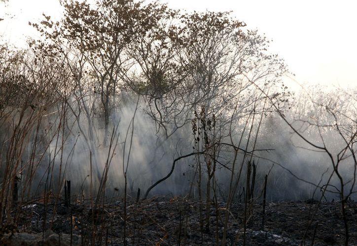 Los incendios forestales en Yucatán están arrasando con la vegetación: entre el 16 de febrero y el 4 de marzo se han consumido 800 hectáreas de vegetación. (Milenio Novedades)