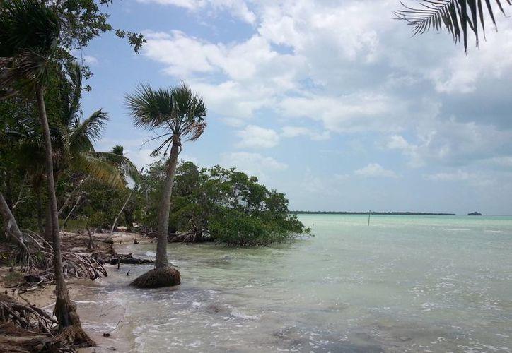 La única área natural protegida de carácter municipal es el ombligo verde. (Eddy Bonilla/ SIPSE)