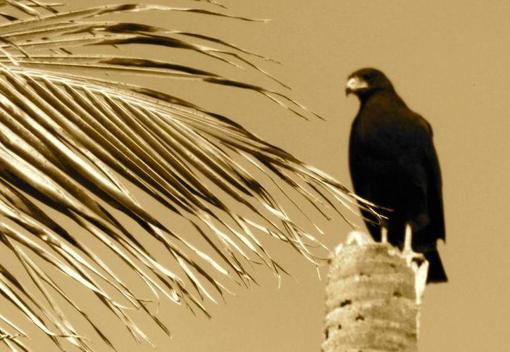 El 70% de las aves que anidan en la Reserva de Sian Ka'an sufren alteración de su entorno. (Archivo/SIPSE)