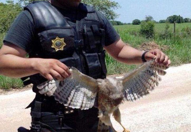 El policía identificado como Wilfer Geovany Contreras Rosado presume en redes sociales la caza de un halcón, un cocodrilo y otros animales, algunos en peligro de extinción. (Fotos tomada de excelsior.com.mx)