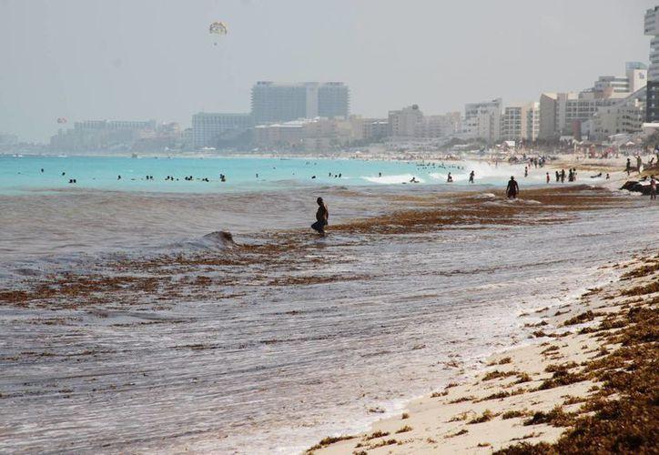 Las playas de Cancún han sufrido la llegada atípica del sargazo, situación ya atienden las autoridades. (Consuelo Javier/SIPSE)
