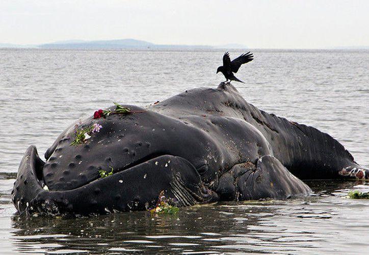 La NOAA ha pedido una investigación sobre la causa de la muerte de los cetáceos. (RT)