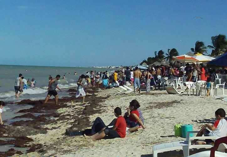 Al parecer, el sargazo acumulado no importó mucho al turismo que abarrotó esta Navidad las playas progreseñas. (Manuel Pool/SIPSE)