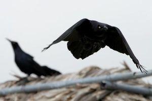 Evaden Solidaridad, aves ahora prefieren ir más al sur