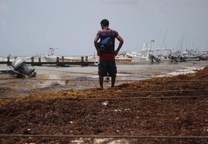 El aumento de la presencia de sargazo en las playas será uno de los temas que se tocarán en la Cámara de Diputados. (Octavio Martínez/SIPSE)