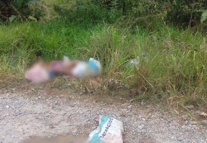 Este viernes cuatro policías fueron levantados en Veracruz: uno de ellos escapó, pero está grave, y los otros tres fueron asesinados y sus cuerpos fueron hallados en Tabasco. (proceso.com)