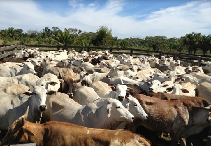 Autoridades sanitarias detectaron casos de fiebre paralítica en los límites de Quintana Roo. (Carlos Castillo/SIPSE)