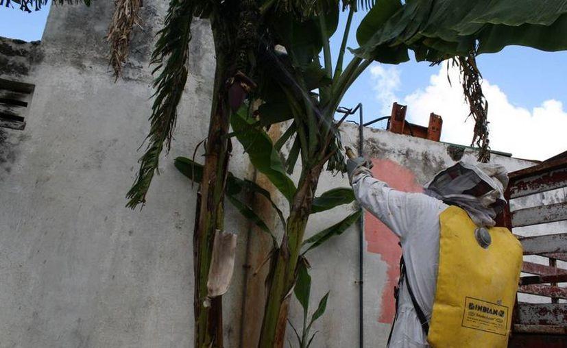 Para realizar la destrucción de colmenas, los elementos cuentan con un equipo de protección y manejo de insectos. (Harold Alcocer/SIPSE)