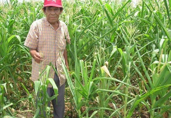 Piden a los ejidatarios de Tulum que antes de vender sus tierras, se asesoren para no aceptar precios irrisorios. (Foto de contexto/Internet)