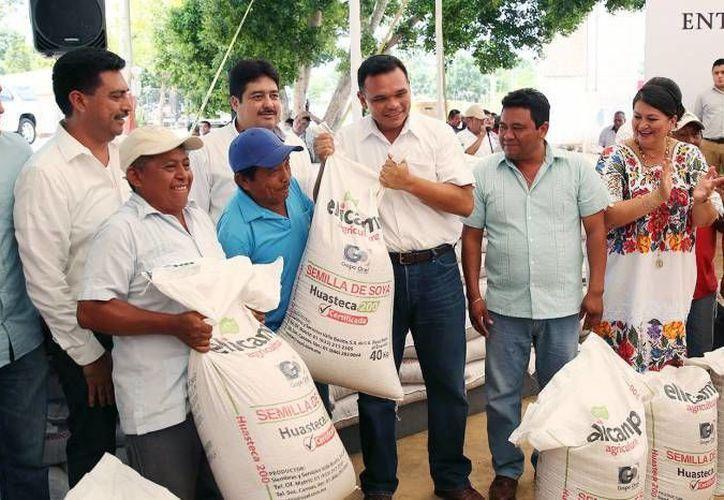 Milperos de Chikindzonot ya empezaron a sembrar con semillas mejoradas que les entregó recientemente el gobierno estatal encabezado por Rolando Zapata, quien en la foto aparece con campesinos de Tekax. (Milenio Novedades)