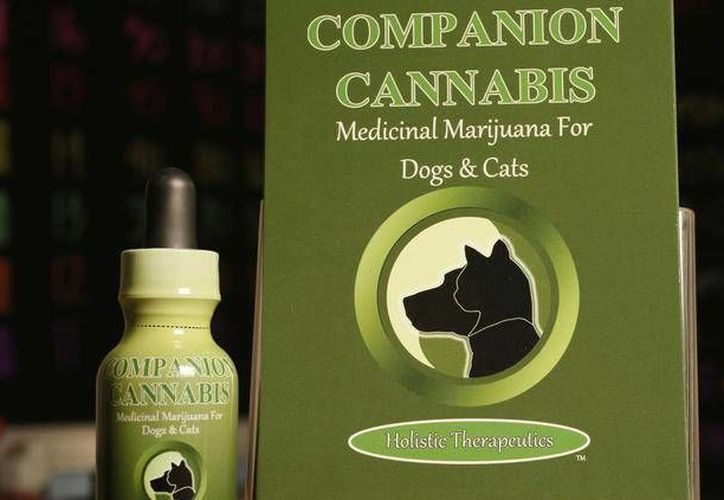 En la actualidad, el 77 por ciento  de los dueños de perros en Colorado y en otros estados administran marihuana medicinal a sus mascotas, según un reporte del Colegio de Medicina Veterinaria de la Universidad Estatal de Colorado. (Excelsior)