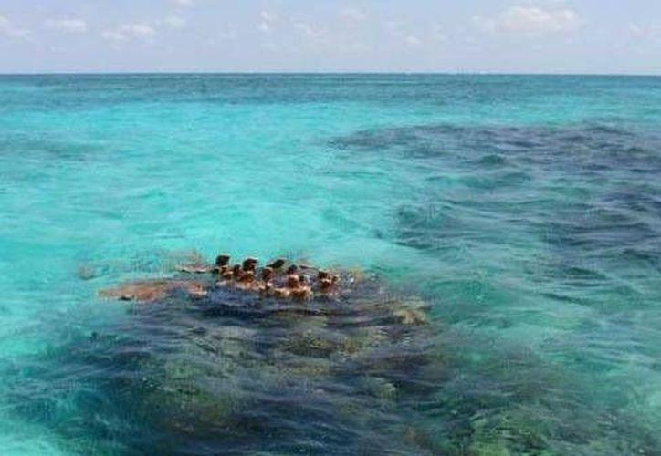 La Comisión Nacional de Áreas Naturales Protegidas protege 1.8  millones de hectáreas marinas. (Redacción/SIPSE)