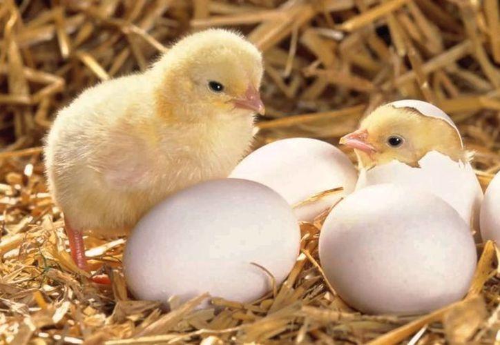 Una granja avícola desechó miles de huevos porque creía que se encontraban en mal estado. (Foto: Contexto)