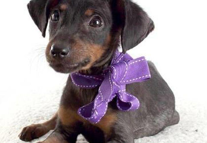 En el evento estarán más de 20 perros en busca de una familia. (Foto de Contexto/Internet)