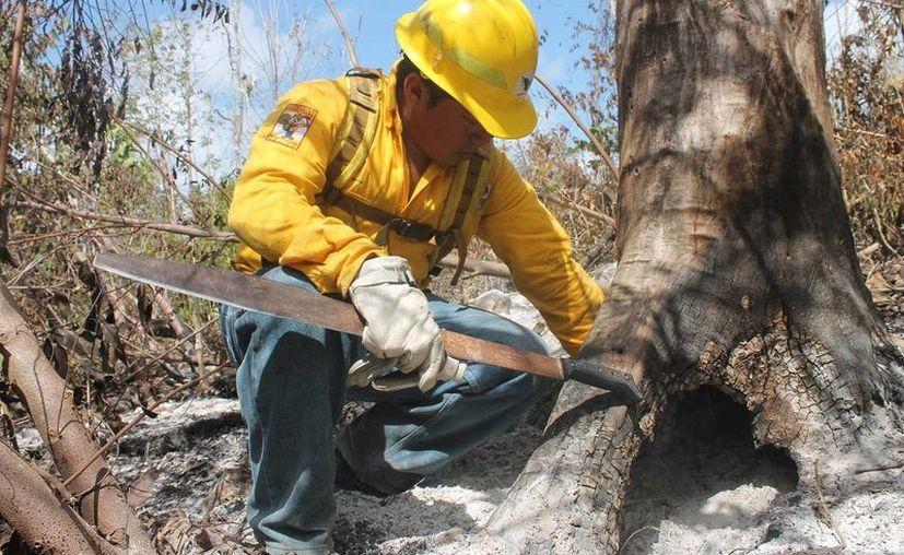 Estados Unidos se ve afectado cada año por un estimado de entre 50 mil y 60 mil incendios forestales. (Edgardo Rodríguez/SIPSE)