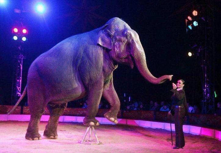 Rechazan que los animales sean utilizados en circos. (Sergio Orozco/SIPSE)