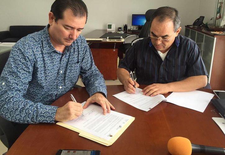 Los municipios de Q. Roo resultarán beneficiadas con el programa de reforestación. (Edgardo Rodríguez/SIPSE)