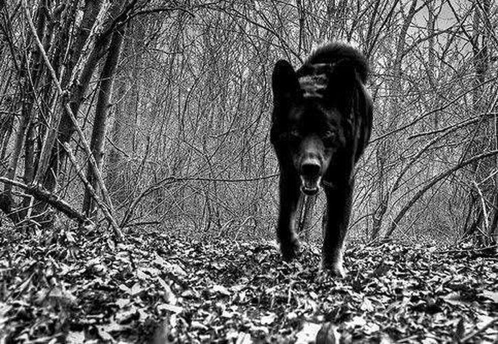 Según la leyenda, el perro de cera aún permanece enterrado cerca de Uxmal. (Jorge Moreno/SIPSE)