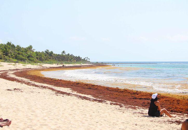 Ambientalistas piden ampliar zona de protección de la tortuga marina. (Octavio Martínez/SIPSE)