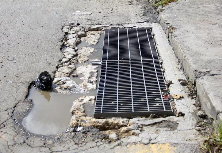 Advertencia de Ecología municipal, las denuncias se harán en Ayuntatel. (SIPSE)