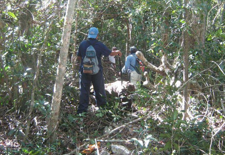 Ejidatarios de Emiliano Zapata y Nueva Loría buscan alternativas que les generen mejores resultados en las plantaciones forestales. (Manuel Salazar/SIPSE)