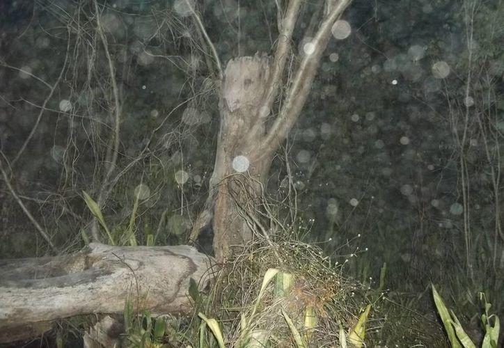 """La primera foto tomada al árbol del """"rostro misterioso"""" salió llena de """"orbs"""". (Jorge Moreno/SIPSE)"""