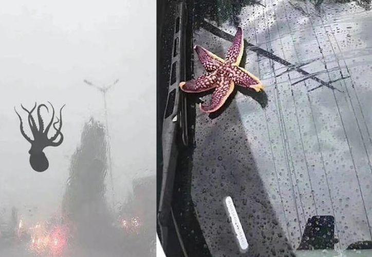 En la ciudad costera de Qingdao (China) cayeron del cielo una gran cantidad de criaturas marinas. (Foto: Twitter)