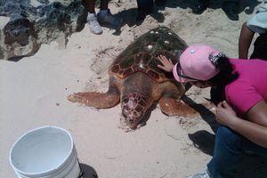 Estudian el cáncer que ataca a las tortugas marinas