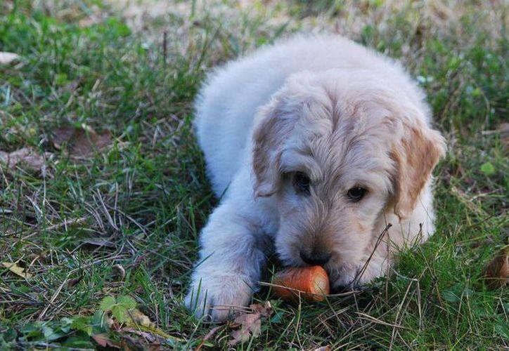 Existen pocos veterinarios que saben dar una buena alimentación a las mascotas. (Contexto)