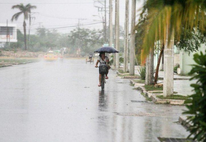 La lluvia de este jueves no trajo vientos tan fuertes como en otras ocasiones en que han derribado árboles. (Amílcar Rodríguez/Milenio Novedades)