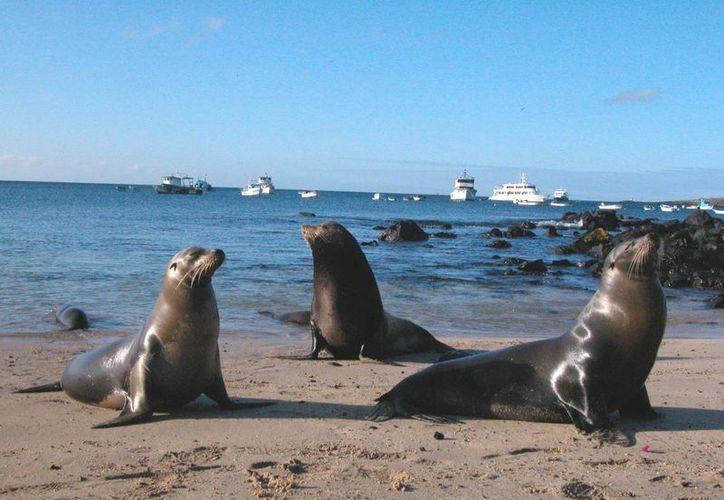 Los ganadores de la 'Feria de Ciencias 2015' viajarán a las Islas Galápagos en una expedición de National Geographic. (turismo.gob.ec)