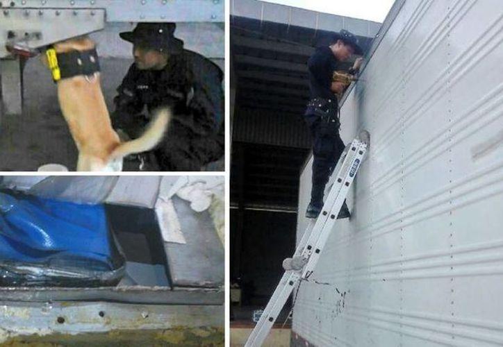 La droga fue hallada con el apoyo de un perro entrenado. (elsalvador.com)