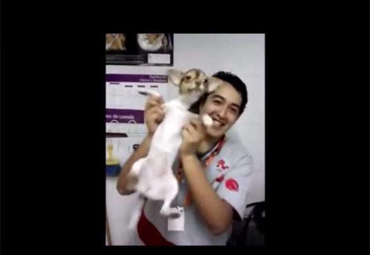 Los videos del maltrato de empleados de +Kota en Pachuca a dos perritos y un hámster levantó gran indignación en redes sociales. (Excélsior)