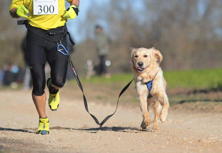 Podrán participar adultos y niños, y ambos pueden llevar a sus perritos. (Foto: Contexto/SIPSE)