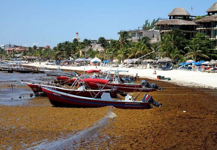 El sargazo acumulado en El Recodo alejó a los turistas de dicha zona, ubicada en pleno centro turístico de Playa del Carmen. (María Mauricio/SIPSE)