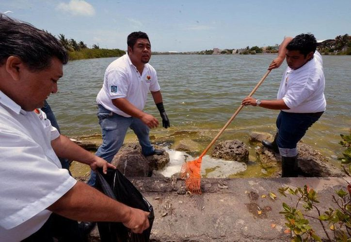 Realizan la limpieza de la Salina Grande. (Redacción/SIPSE)