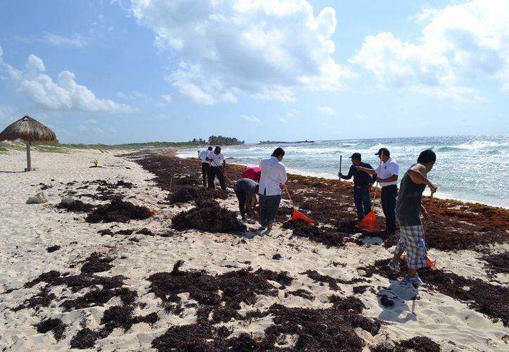 El personal voluntario labora desde muy temprano para mantener las playas de Cozumel limpias. (Redacción/SIPSE)